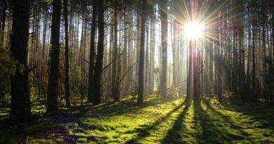 День работника леса