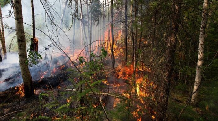 Масштабный пожар на территории «Балаклейского лесхоза»