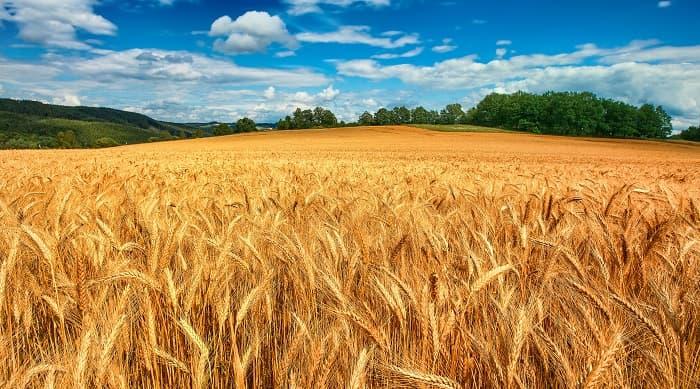День села Савинцы: 15 сентября приглашаем Вас на празднование 347-й годовщины