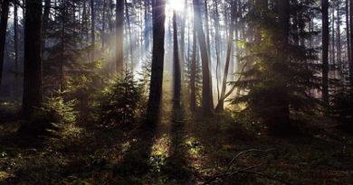 Поехал в лес и заблудился: спасатели нашли в лесу мужчину из Балаклеи