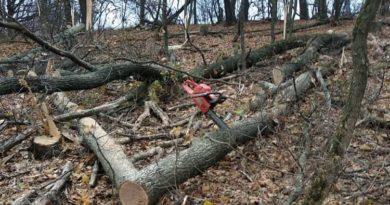 вырубка лес
