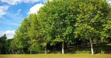 деревья посадил зачем