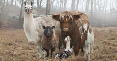 класыне животные