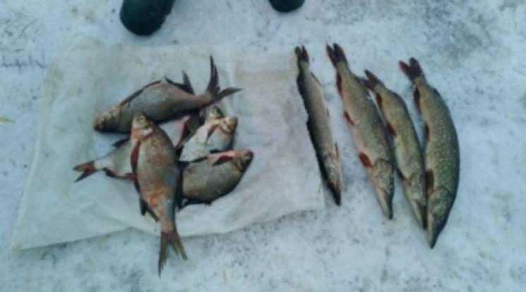 рибаыыы