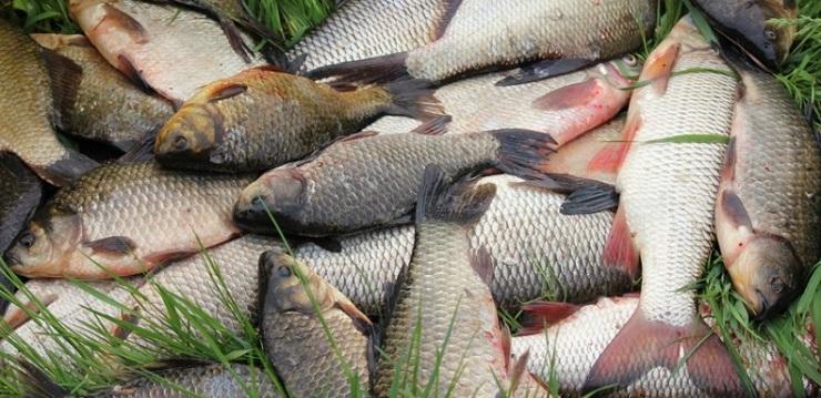 браконьеры рыбы
