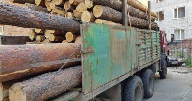 рубят лес
