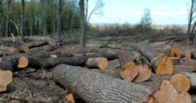 На Харківщині незаконна вирубка лісу завдала майже 58,5 мільйона гривень збитків