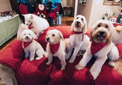 10 кращих порід собак для квартири